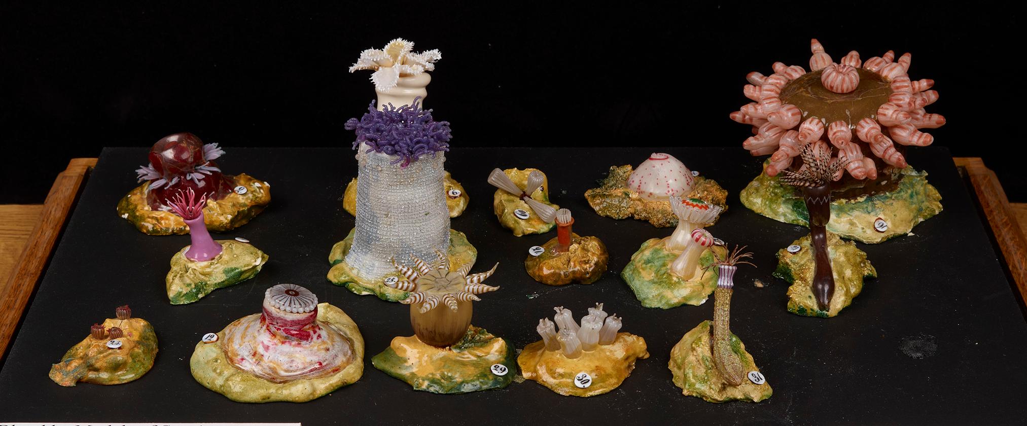Blaschka models, Oxford University Museum of Natural History