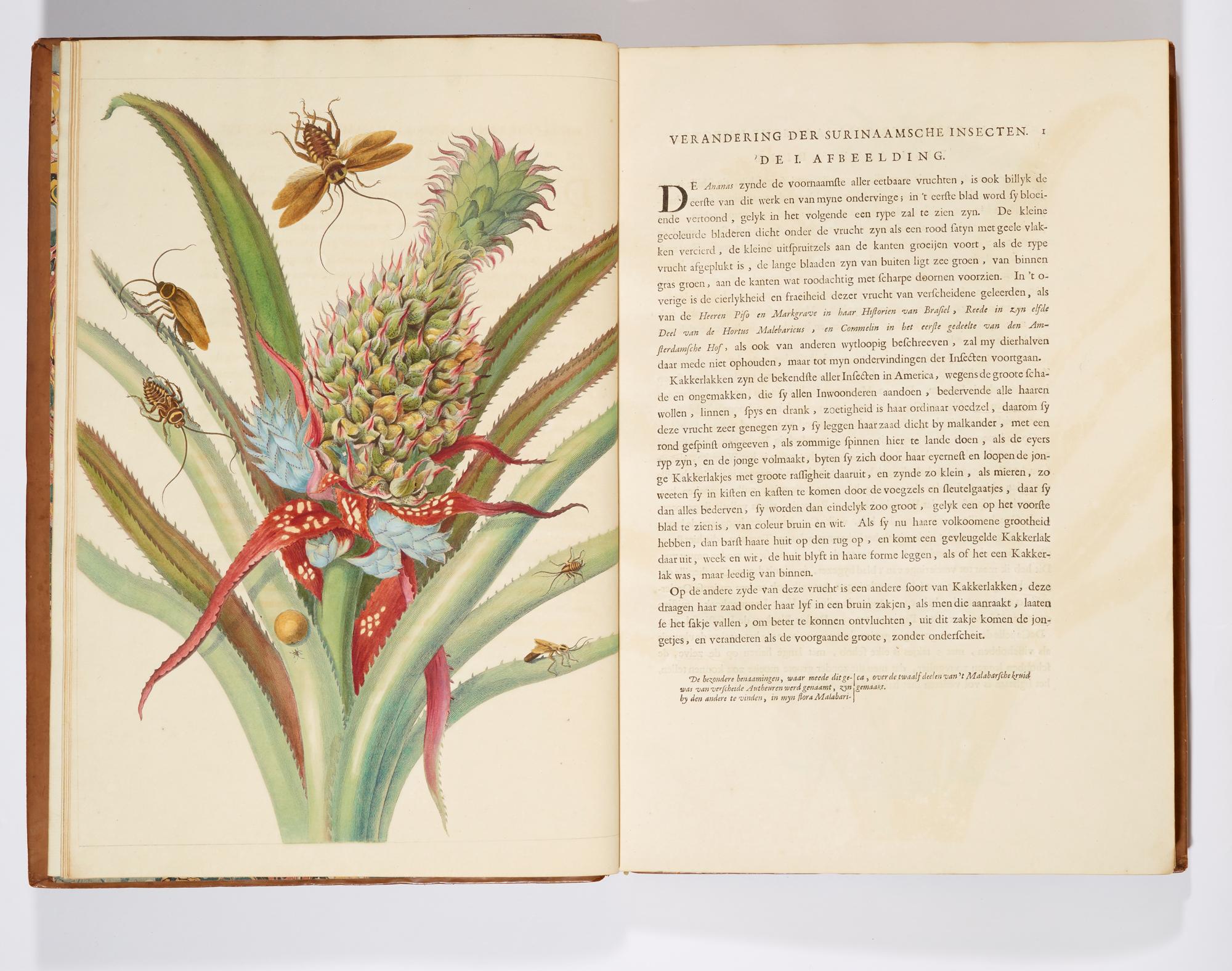 Maria Sybilla Merian's Insects of Suriname