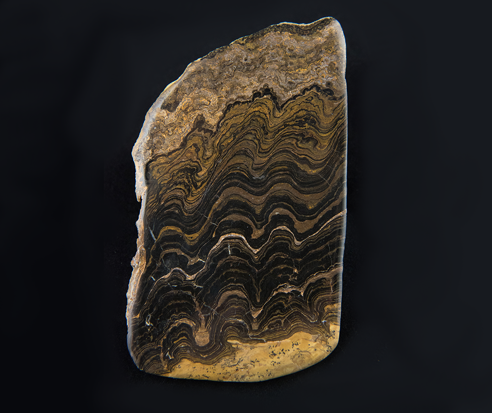 A stromatolite between 2.2 and 2.4 billion years old from Cachabamba, Bolivia