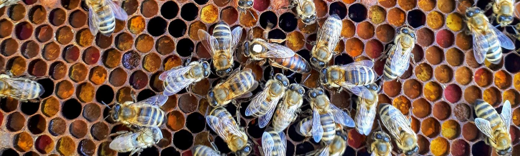 Image of bees taken by Boba Jaglicic