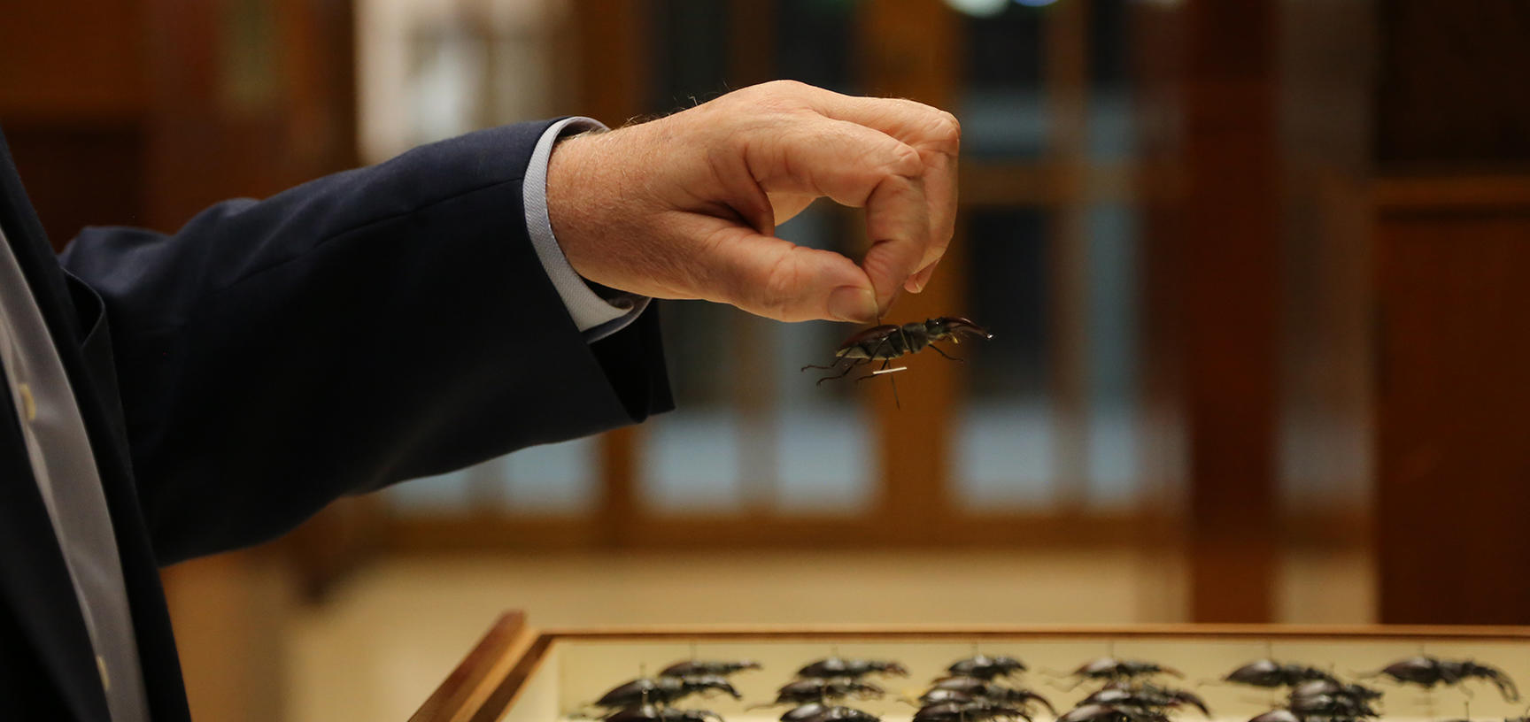 Image showing a hand picking up an insect specimen from the collection at OUMNH