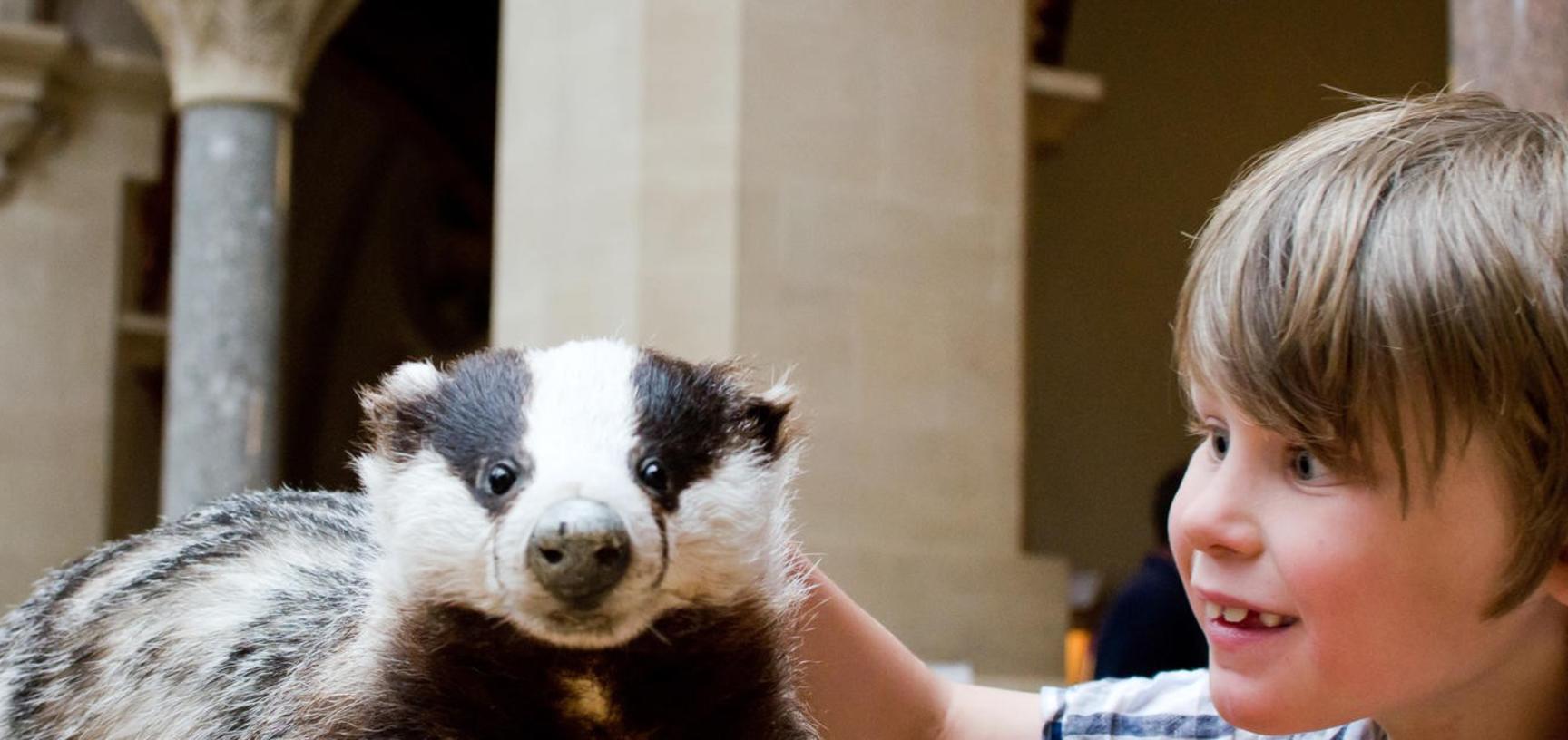 oumnh  badger