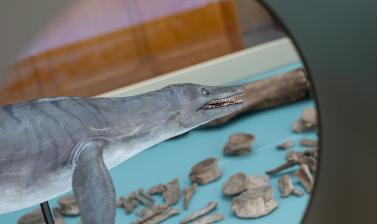 pliosaur model