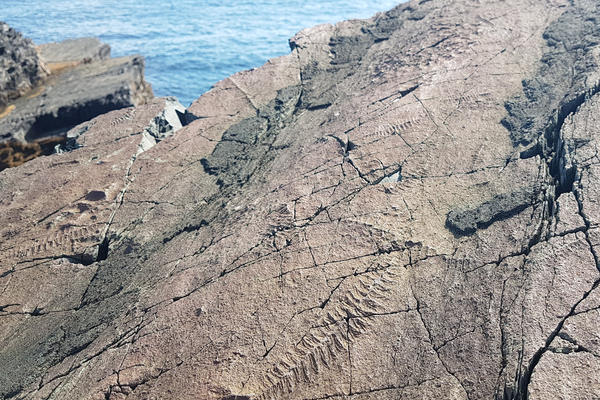 A fossil bed in Newfoundland, Canada - a UNESCO World Heritage site.
