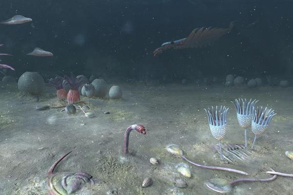 cambriannovetulicolajpg 0