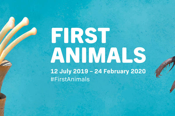 first animals twitter header final aw v1 6resize