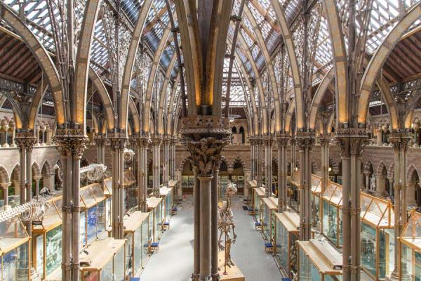 Oxford University Museum of Natural History interior court architecture