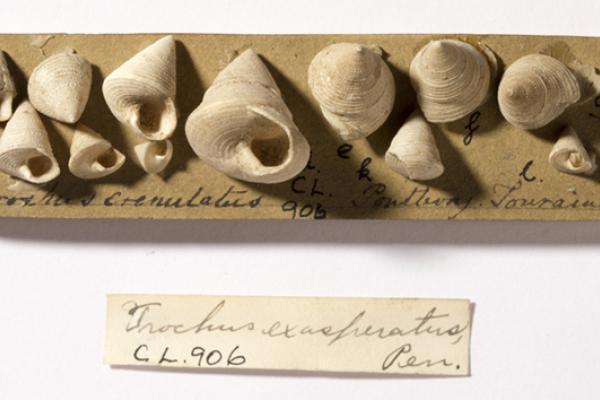 lyell shells
