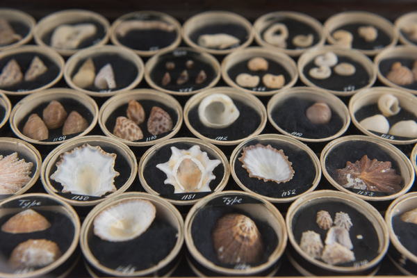 Mollusc collection at the Museum