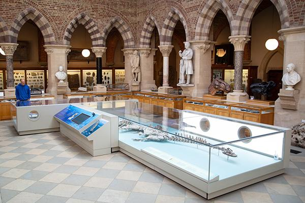Large glass cabinet with display of plesiosaur dinosaurs in