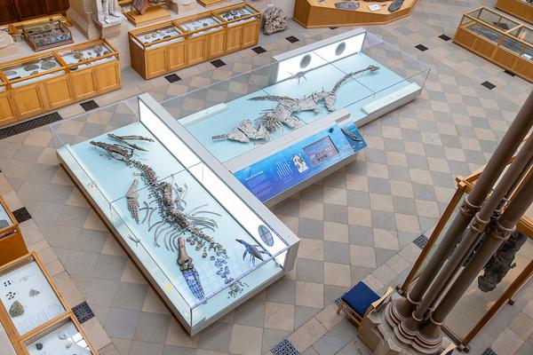 Plesiosaur and Pliosaur, Oxford University Museum of Natural History