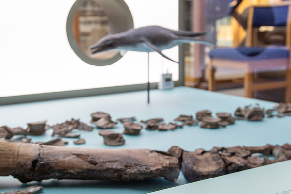 Oxford Clay Formation is renowned for its abundant and well preserved marine reptile fossils.
