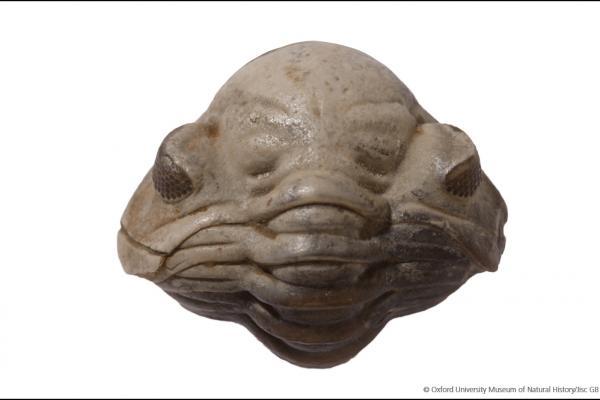 trilobite alien