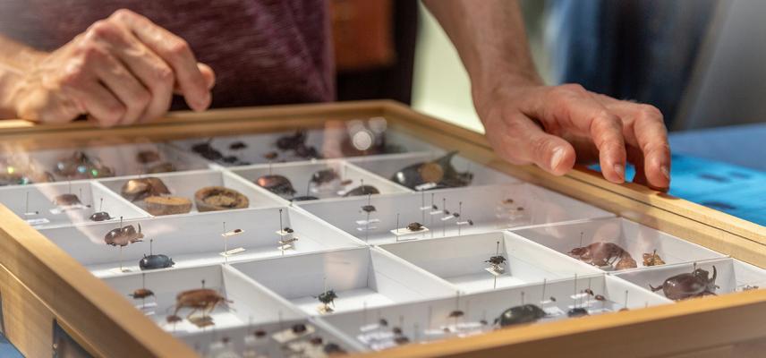 Entomologist explaining dung beetles