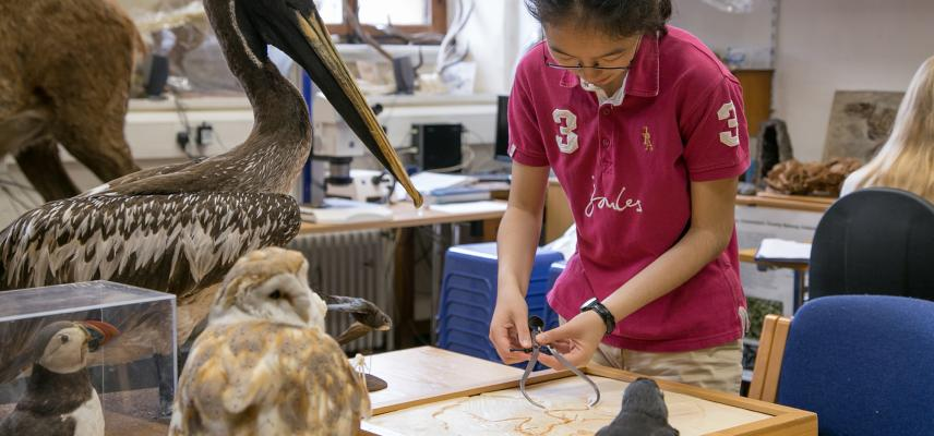 Extra-curricular sessions for young a the Museum