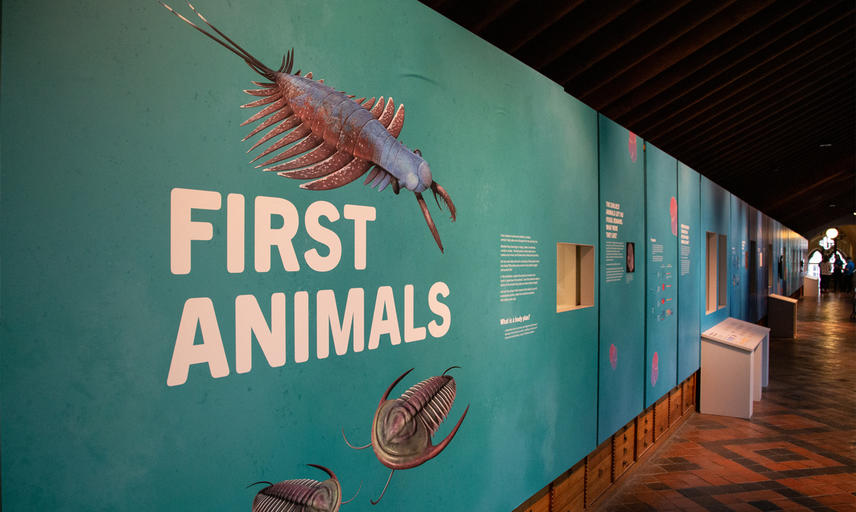 The First Animals exhibition